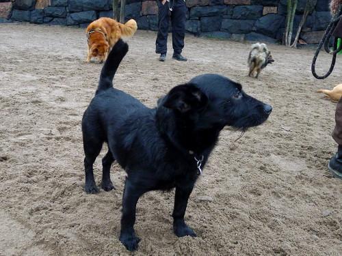 Rita koirapuistossa