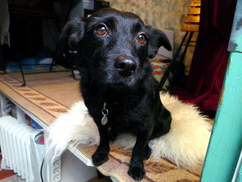 Rita, CouchSurfing-koira