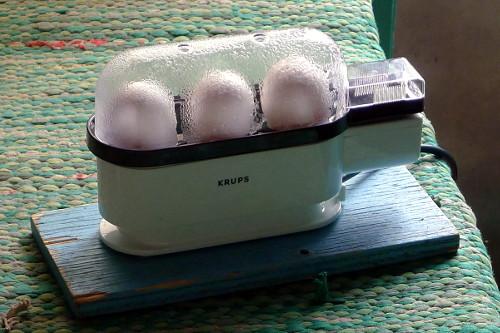 Kananmunat kiehumassa Krups Ovomat Trio -munankeittimessä