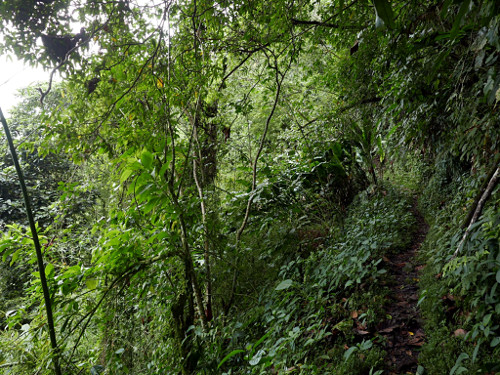 Waitukubuli National Trail (Dominica)