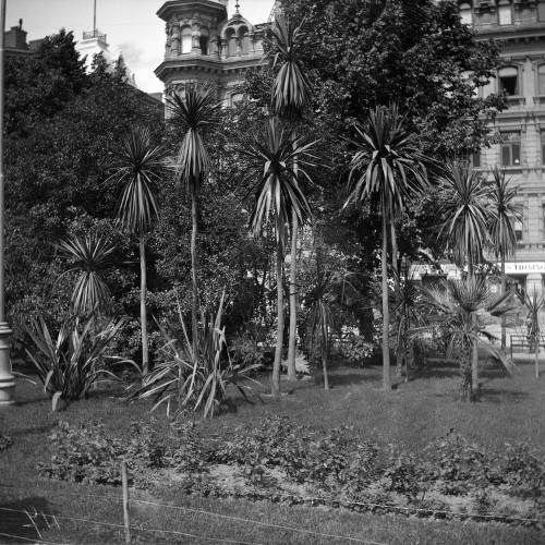 Palmuja Esplanadin puistossa 1910-luvulla (Ivan Timiriasew / Helsingin kaupunginmuseo)