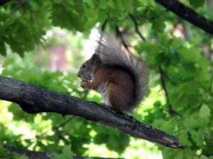 Orava, Hakunila