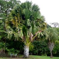 Palmusunnuntai 2018 on 25. maaliskuuta