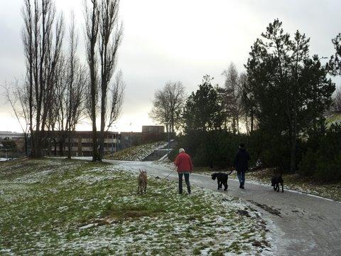 Jos Rinkebyssä näki koiria, niin ne olivat yleensä isokokoisia