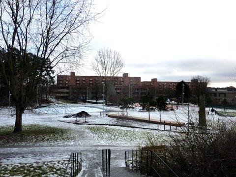 Puisto ja taloja Rinkebyn itäosissa
