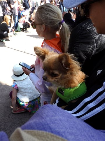 Some puppies watched the parade from the side