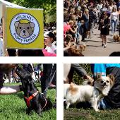 Helsinki Puppy Parade 2016