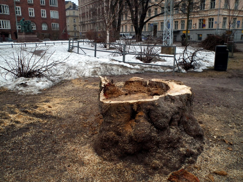 Koulupuistikon kanto / Tree stump