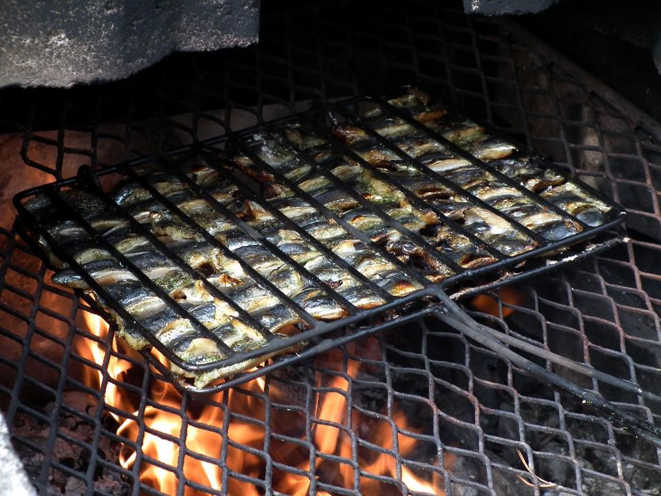 Silakat, halsteri, Baltic herrings
