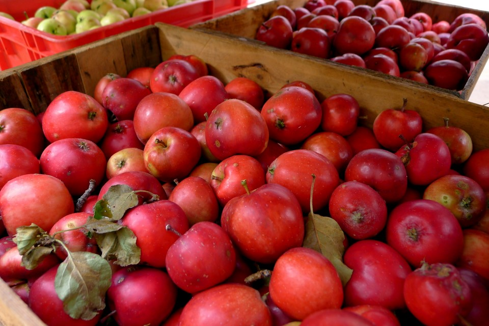 Punaisia omenoita / Red apples