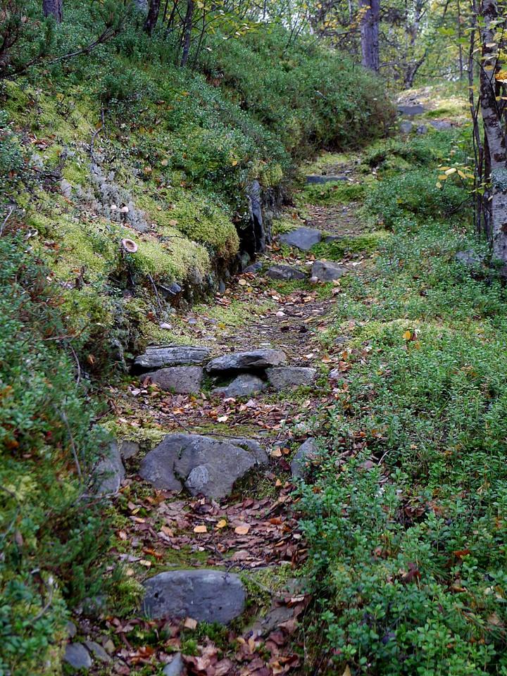 Metsäpolku / Forest trail, Enontekiö (Finland)