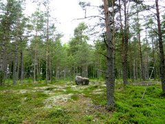 Forest in Åland