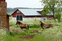 Hevosia Norrsundassa