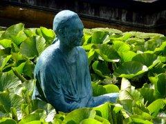 Pond lacustre