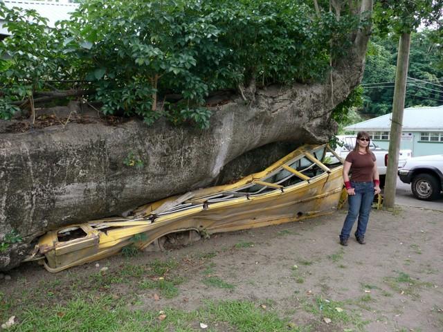Puun alle jäänyt koulubussi