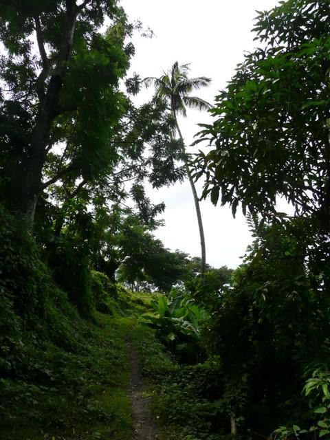 Trail (3)