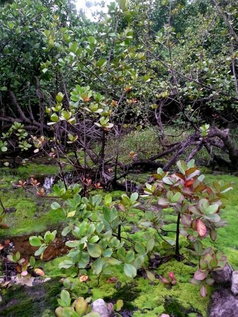 Plantes du marais