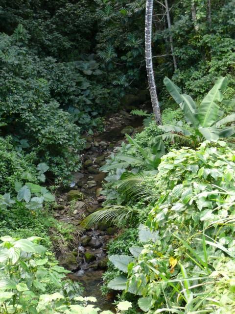 Celestin River