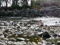 Niko in the river