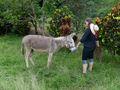 Donkey and Mari