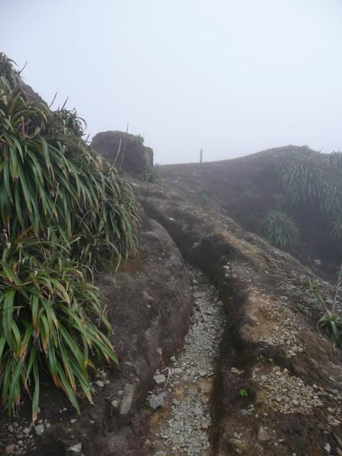 Foggy footpath