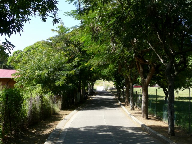 Rue avec arbres