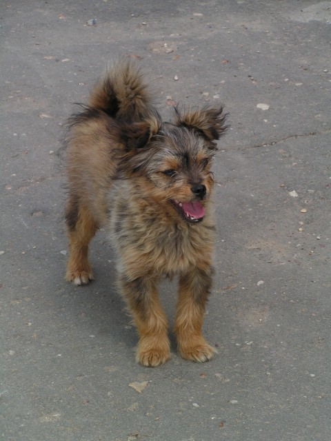 Un autre chien