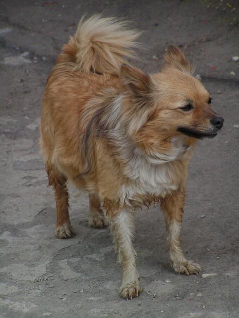 Le troisième chien