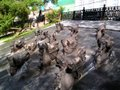 Chevaux qui nagent