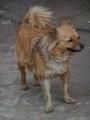 Kolmas koira