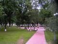 Puisto Volgan rannalla