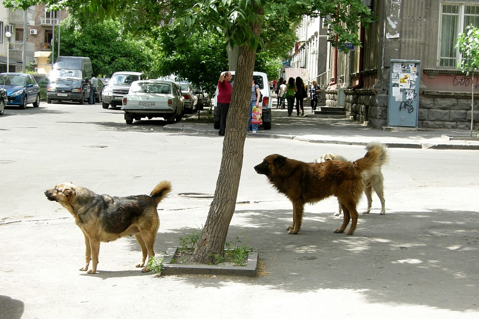 Stray dogs in the street