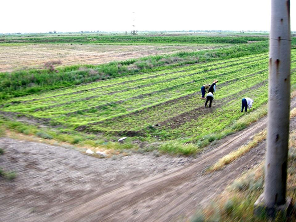 Gens travaillant sur un champ