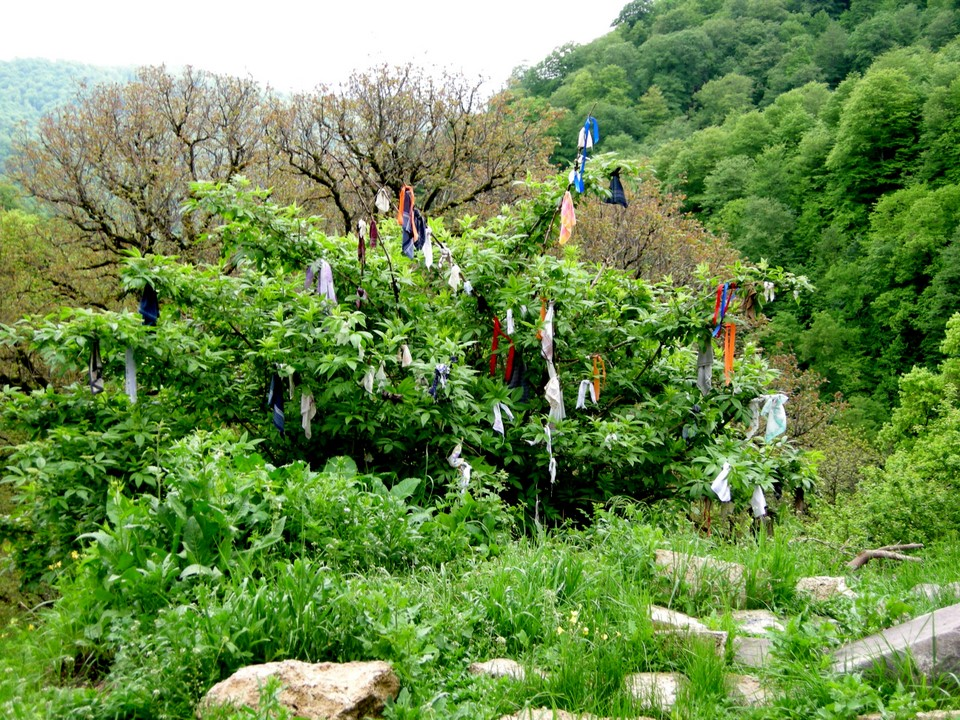 Tree with scarves and pieces of cloth left on it by visitors wishing good luck