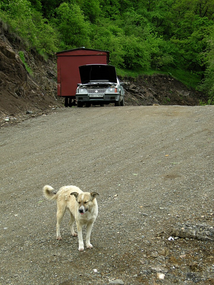 The dog at Haghartsin monastery with our taxi waiting in the background
