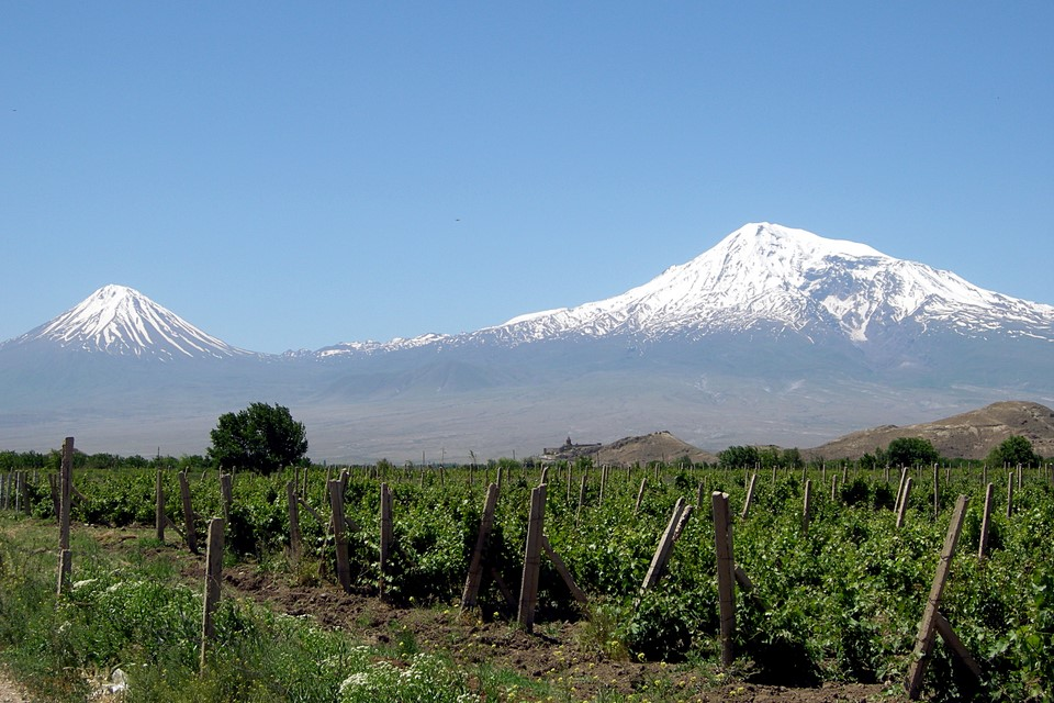 Vineyards, Ararat Mountains and Khor Virap Monastery