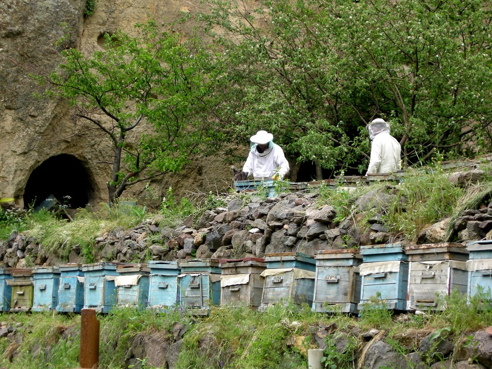 Beekeeping at the monastery grounds