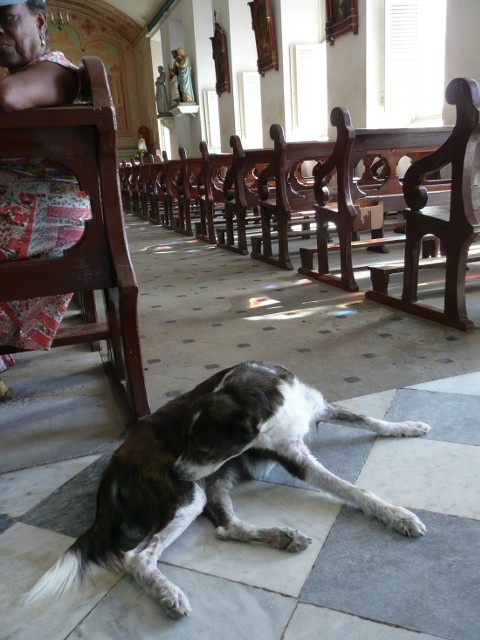 Cathedral dog in Roseau