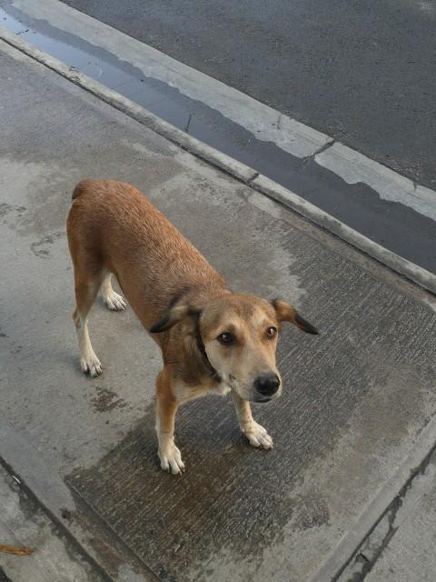Dog in Portsmouth