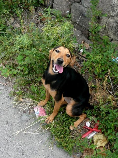 Happy-looking dog of Scottshead
