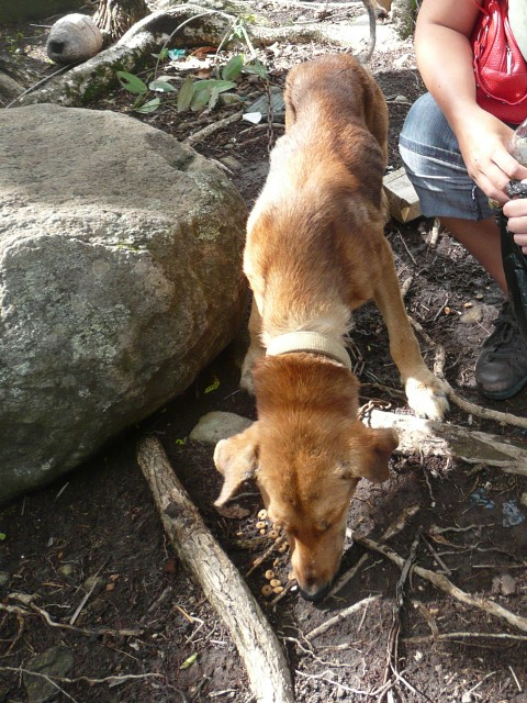 Thin dog attached to a short chain