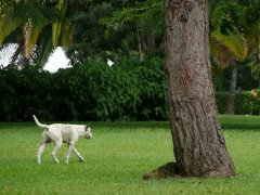 Dog with a tree