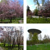 Cherry trees and Japanese Garden in Helsinki