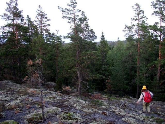Mari laskeutuu alas kalliolta