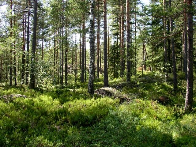 Takaisin metsään