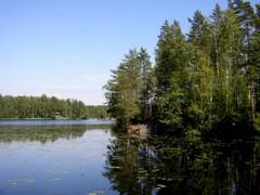 Fiskträsk-järven rantaa