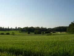 Sotungin peltoja Vantaalla