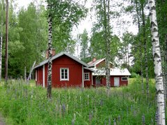 Red cottage in the middle of birches