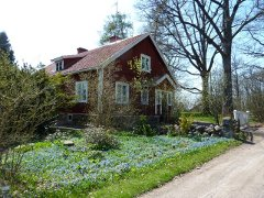 Red wooden house and blue flowers