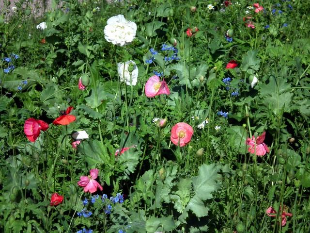 Alkusyksyn kukkia Eiranrannassa